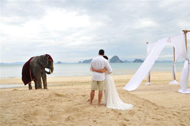 Thailand Wedding Beach Elephant